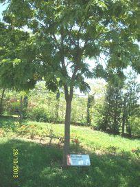3. Parque Ecológico Educativo (11)